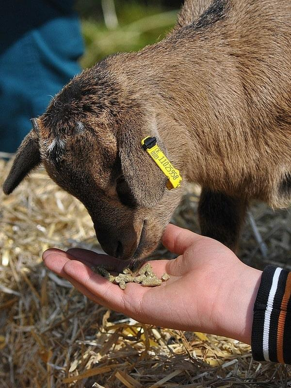 Feeding Animals Short Course