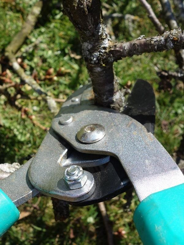 Pruning Short Course